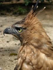Kepala Garuda